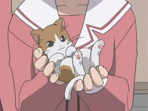 子猫が本当にかわいい