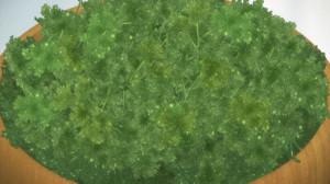 幸腹グラフィティ パセリのグリーンサラダ
