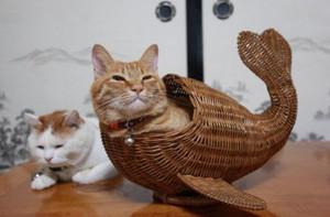 海猫(ウミネコ)
