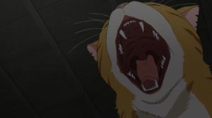 猫のトラさん