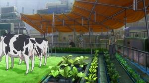 『タバコ ハウス栽培』でググってみな。さまざまな方法がある。他のものも栽培しているんだから、タバコくらい栽培していても不思議じゃない。